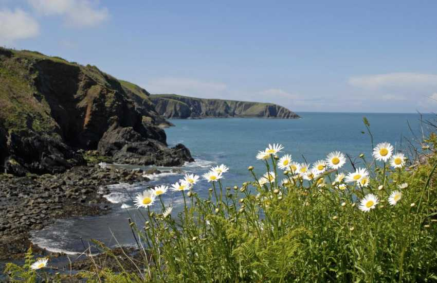 Walk the Pembrokeshire Coast Path for stunning cliff top scenery, flora and fauna throughout the year