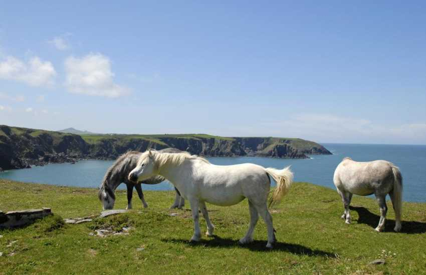 The Pembrokeshire Coast Path - enjoy some of Britain's finest scenery teeming with wildlife and colourful wildflowers