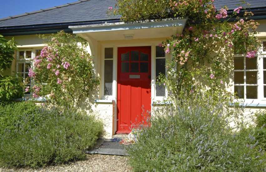Manorbier holiday cottage with roses and lavender round the front door