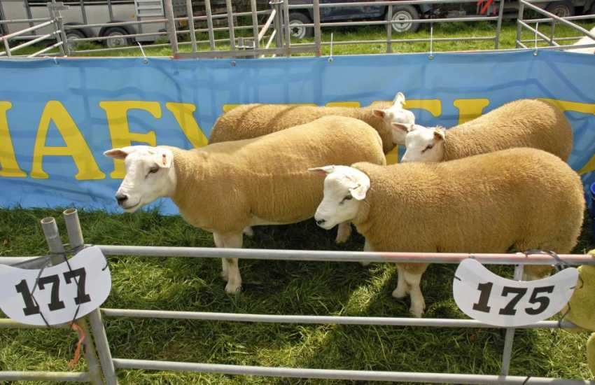 Pembrokeshire's local agricultural shows during the summer months are a real family day out to remember