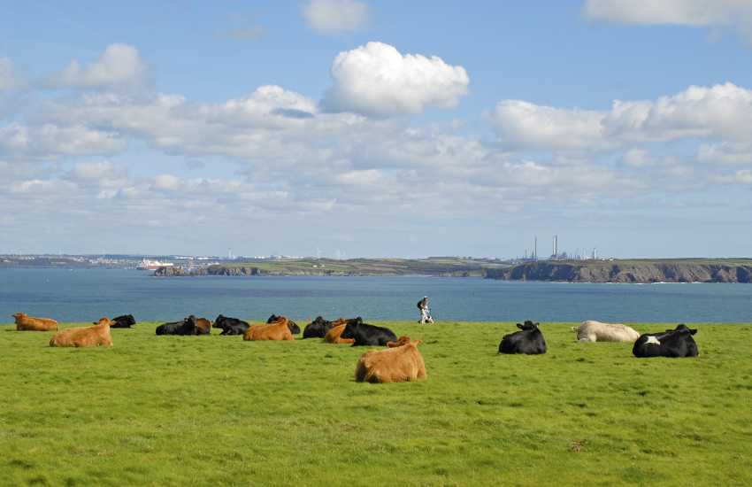 Views over the surrounding headland and the Milford Haven Waterway