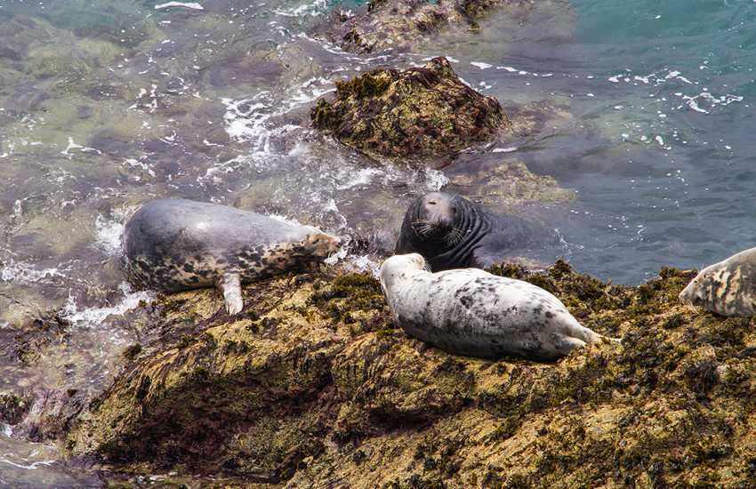 In autumn, seals pup on the rocks and coves around the islands as well as on the mainland can be seen