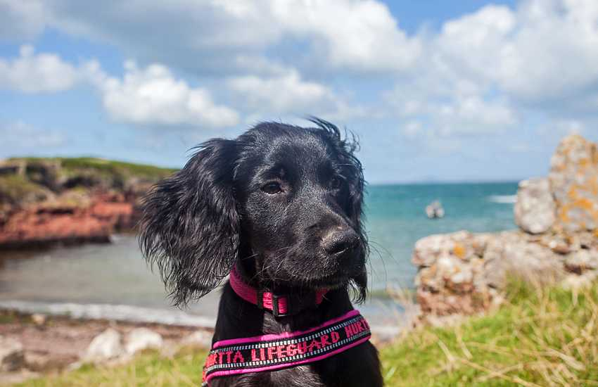 Many of our holiday cottages welcome your dog