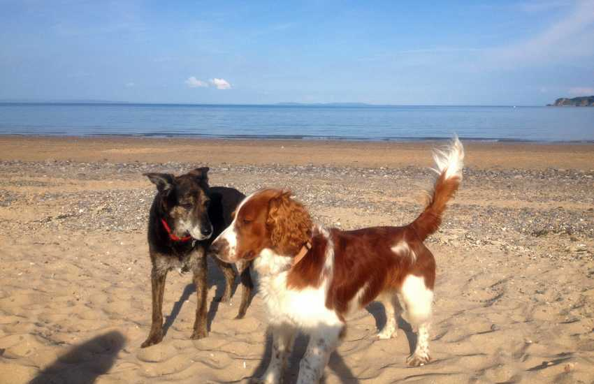 Most Quality Cottages welcome dogs - having fun on the beach!
