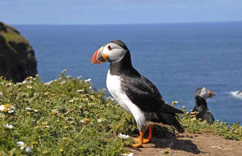 Watch for puffins and a wide variety of sea birds along this rugged Welsh landscape