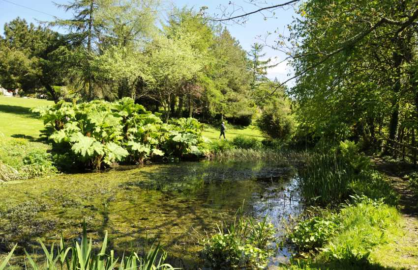 Hilton Court Gardens - a beautiful 12 acre woodland garden with lake, island beds and a wide variety of unusual plants