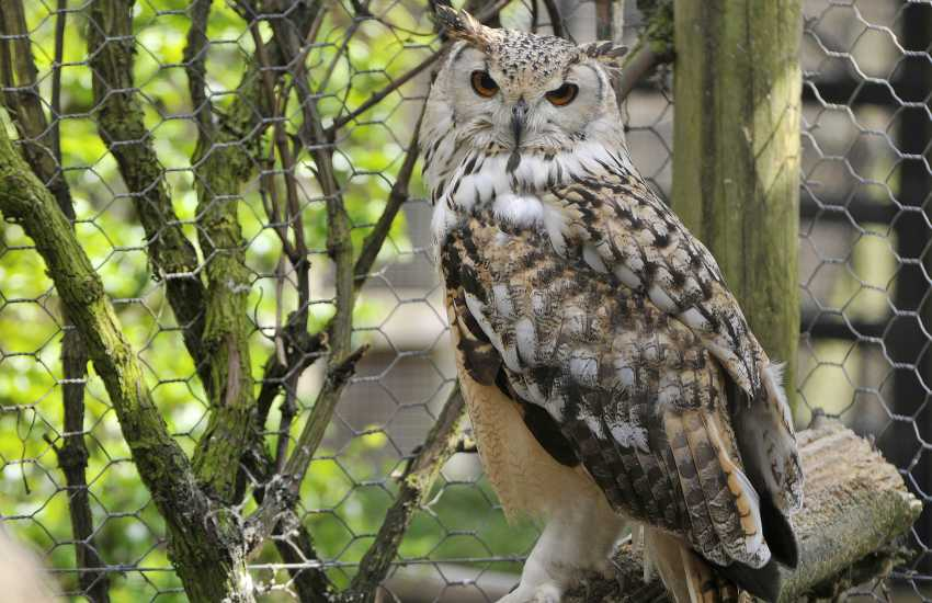 Owl Centre Kington ideal for families, this enchanting place has a huge rare and seldom seen animals