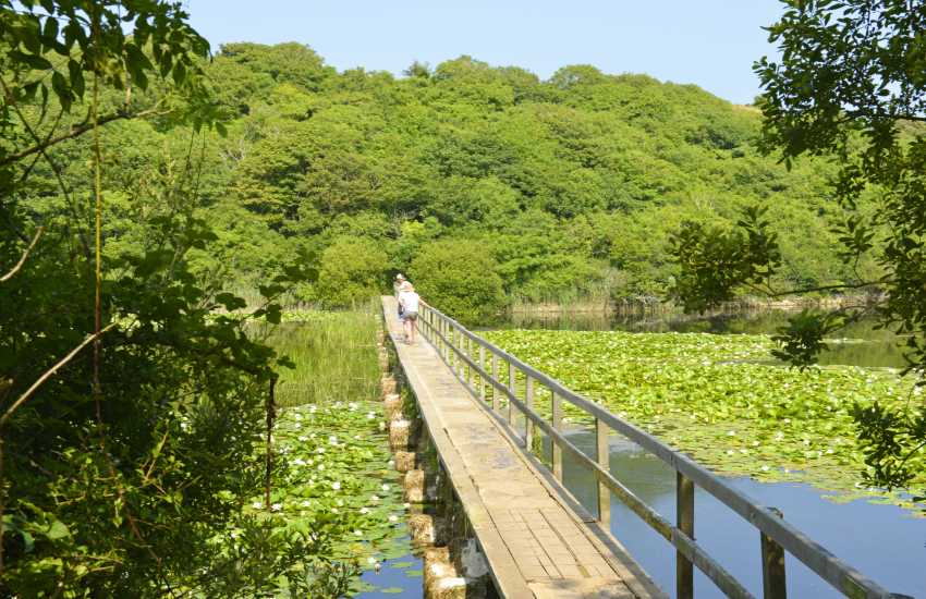 Bosherston Lily Ponds form part of a National Nature Reserve, resident population of otters and lakes stocked with fish