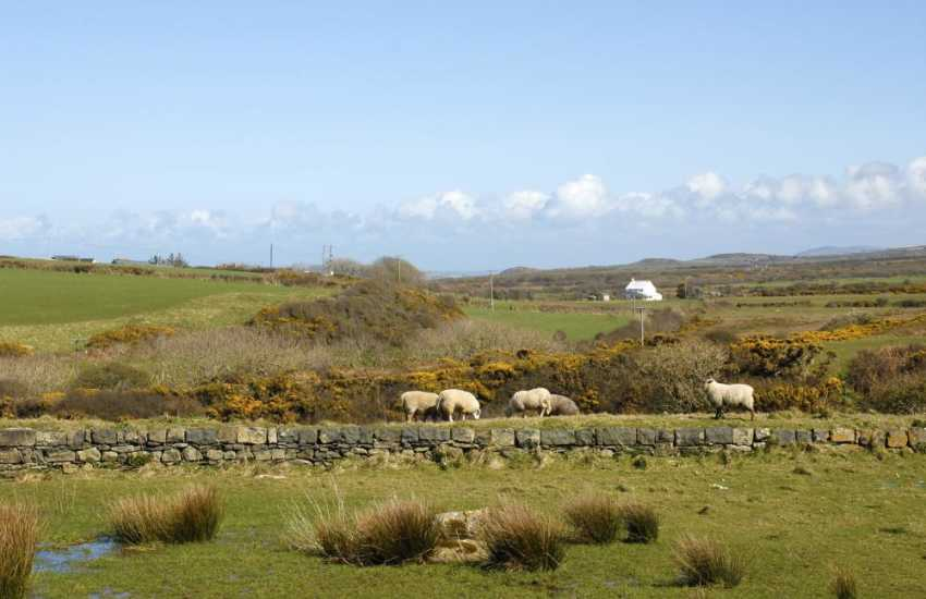 Sheep grazing in the surrounding fields nearby