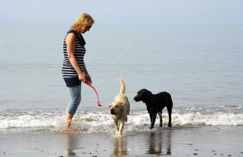 Most Quality Cottages are dog friendly - Enjoying the waves together!