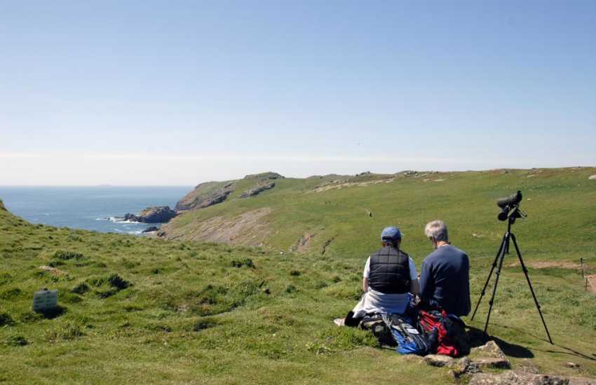 Take time out to enjoy the wide variety of birds that visit the Pembrokeshire Coast whatever the season