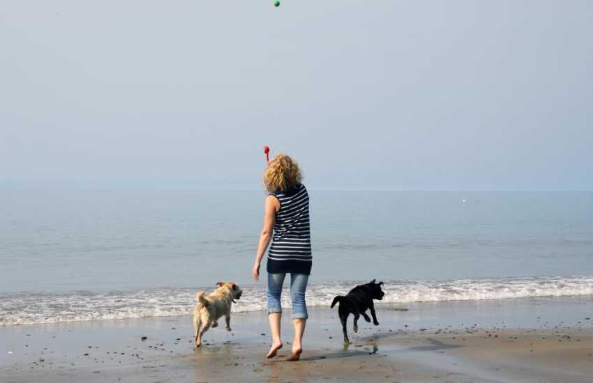 Four legged friends enjoy the beach just as much as you do