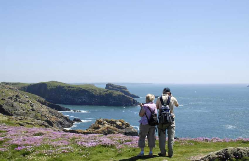 Wonderful cliff-top walking on the bird sanctuary island of Skomer - bursting with flora and fauna throughout spring, summer and autumn