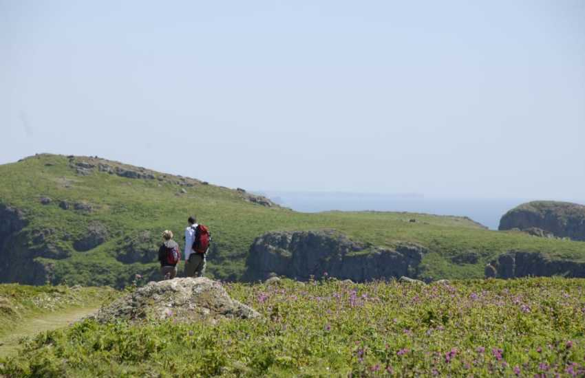 Fabulous walking on the tranquil Island of Skomer - a short boat ride  off the Pembrokeshire Coast.