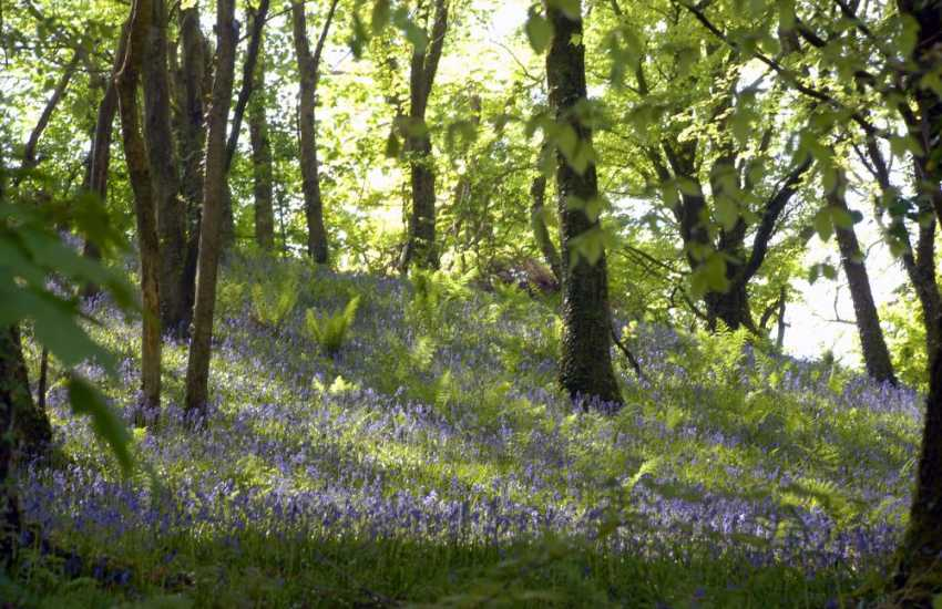 Enjoy the ancient Gwaun Valley filled with flora and fauna throughout the year