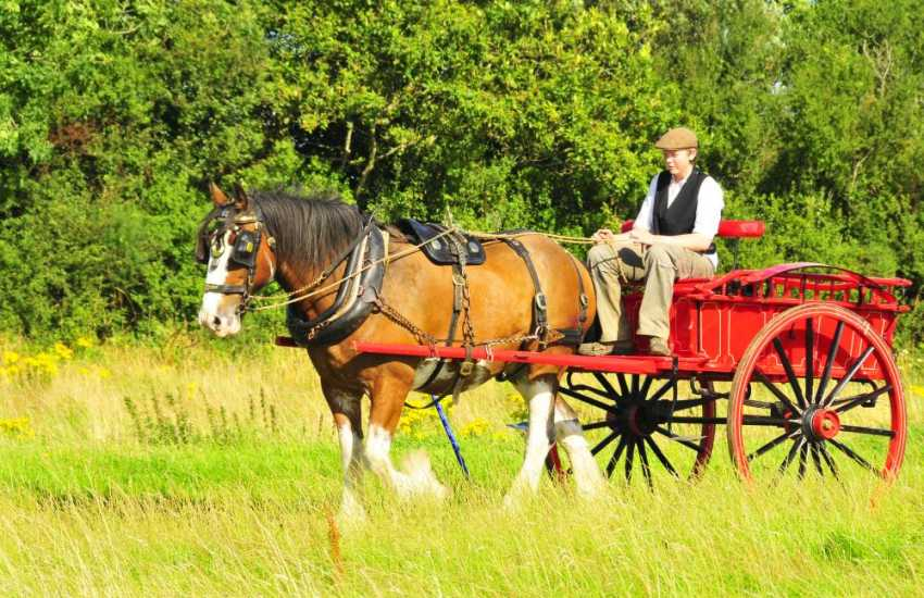 For a fun family day out try the Dyfed Shire Horse Farm. Meet the farm animals, crazy golf, indoor/outdoor play areas or enjoy a leisurely horse and cart ride