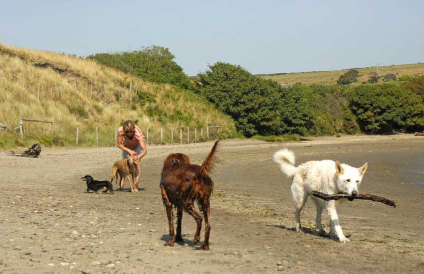 Enjoying Newport Sands - most of our cottages welcomes dogs