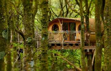 A quirky handmade treehouse sits right in the middle of an ancient welsh woodland. Lichen and moss show you just how clean the air is here