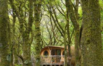 A handmade wooden treehouse for families sits on stilts, surrounded by trees amidst the rich velvety blue of a bluebell wood