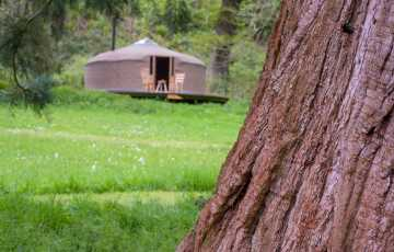 Seren is a bentwood yurt, made in the UK by craftsman Henry Dowell