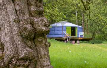 An ancient tree sits in the foreground with colourful glamping yurt in the background, across a meadow