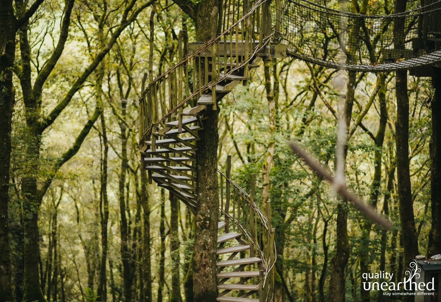 A handmade spiral staircase winds its way around a living tree to meet a rope bridge in mature woodland