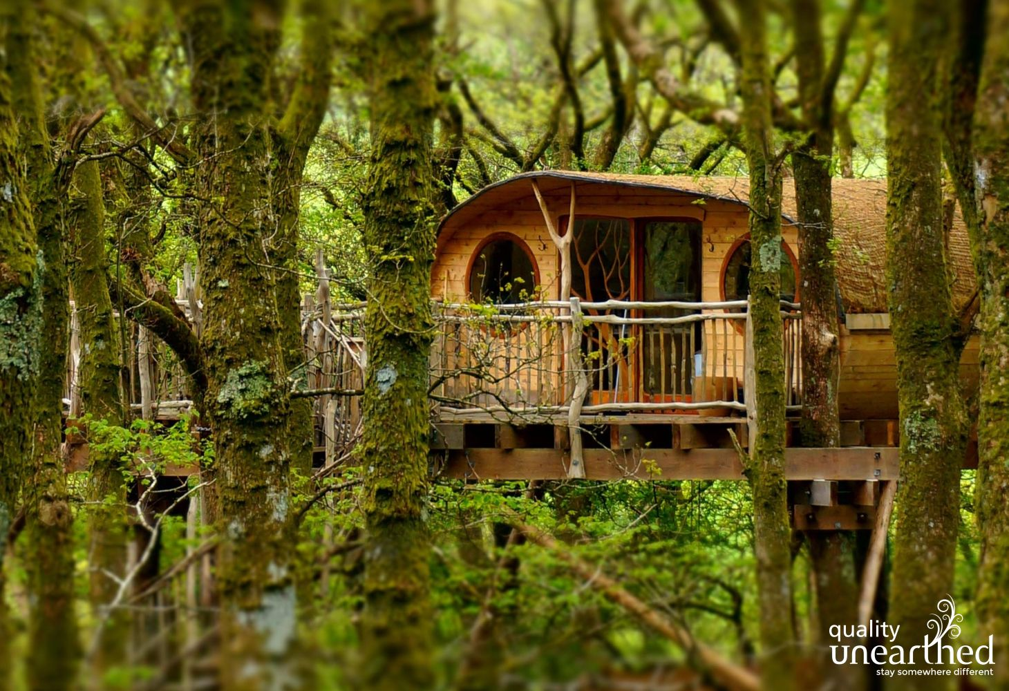 A green roofed hobbit like treehouse right in the middle of mature woodland. Trees are covered in moss and lichen showing the clear woodland air