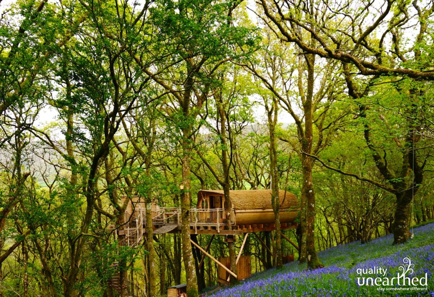 A wooden treehouse sits lightly in woodland beyond a clearing full of bluebells
