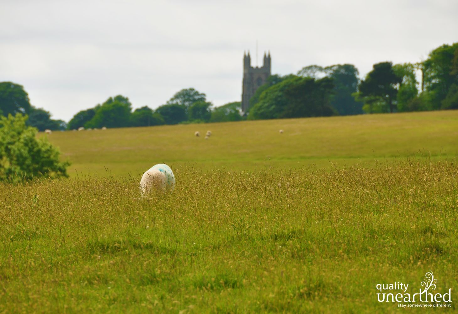 Maker Church And Sheep In Mount Edgcumbe Deer Park 0809