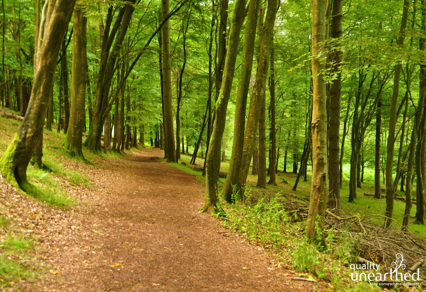 South West Coast Path In Woods At Mount Edgcumbe 0100