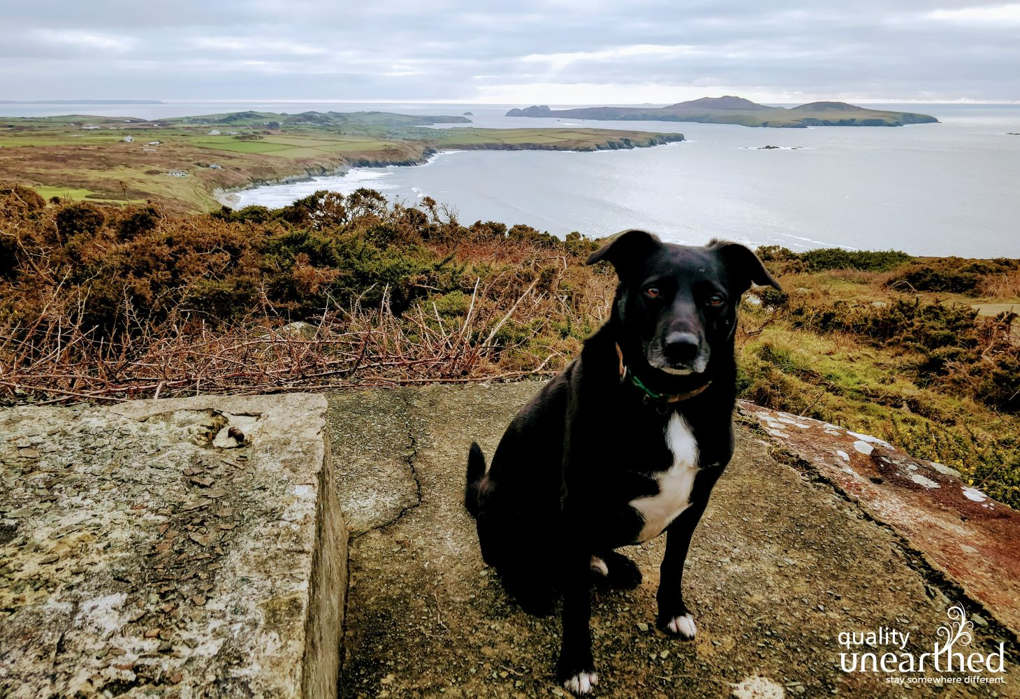 Whitesands Carn Llidi Dog 1 280119
