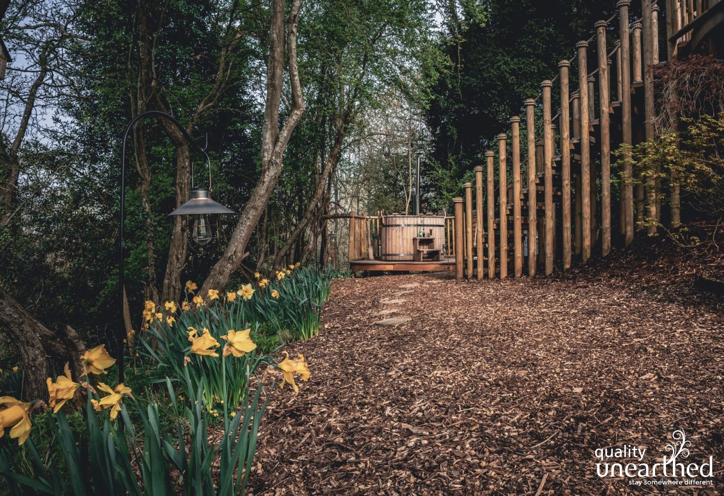 A path leads to a wood fire hot tub. Daffodils grow under the boughs of the Breacon Beacons woods. Steps to the treehouse