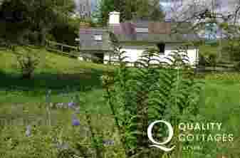 Cottage holiday Ceredigion sleeps 3 - garden