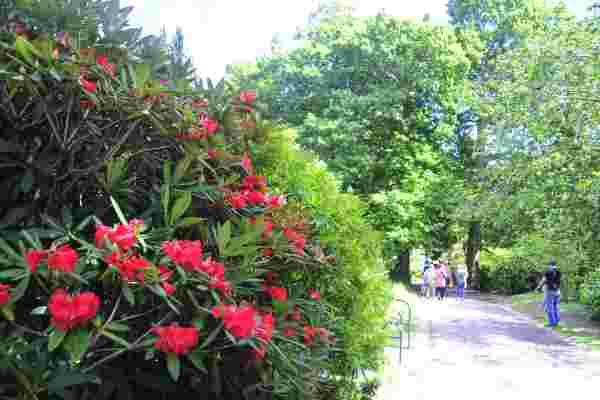 Ffrwdgrech Gardens