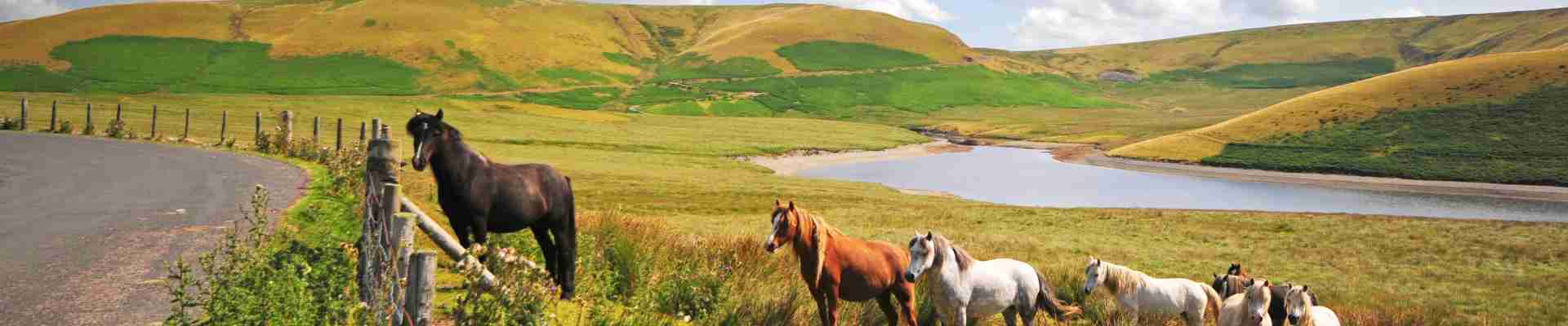 Welsh Borders Holiday Cottages