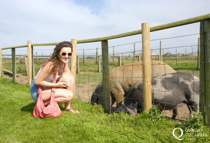 Cardigan Island Park Farm - a small selection of friendly farm animals, adventure playground and a well equipped indoor games centre with cafe all just a few minutes away