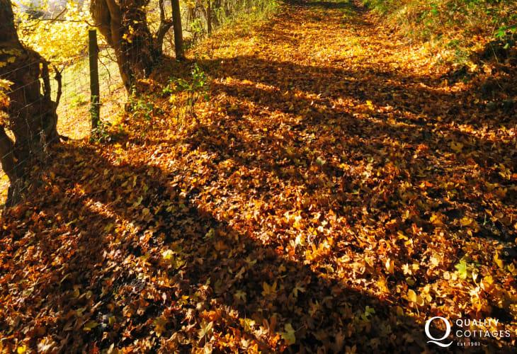 Explore the beautiful lanes and woodland walks around Dolgellau anytime of year.