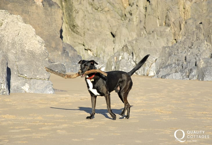 Many of our cottages welcome your dogs - enjoying a stick on the beach!