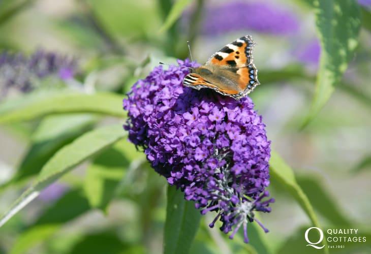 Spot butterflies in the wildflower meadow