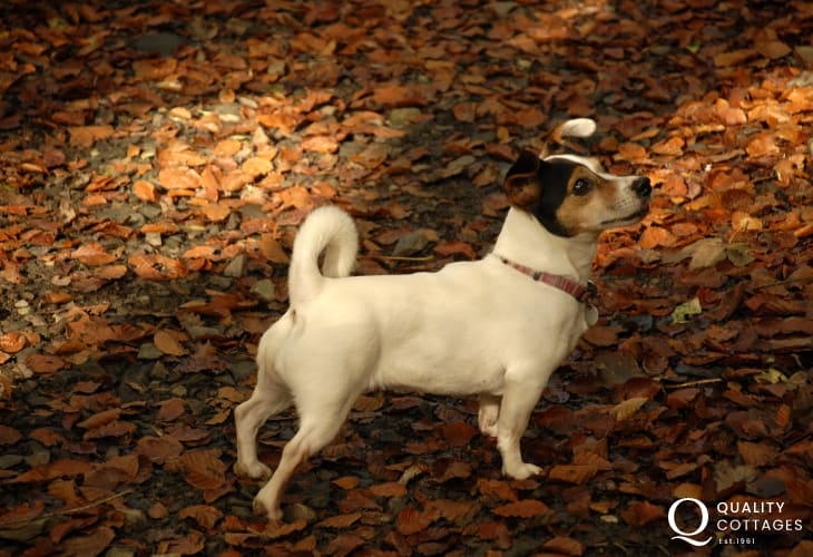 'Lilly' on her autumn walk - most of our holiday cottages welcome pets