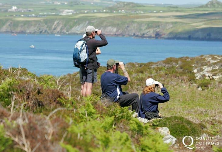 Pembrokeshire Coastal Path - magnificent coastal scenery