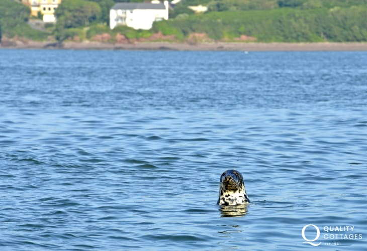Explore the Haven Waterway teeming with wildlife you may be lucky and spot a seal
