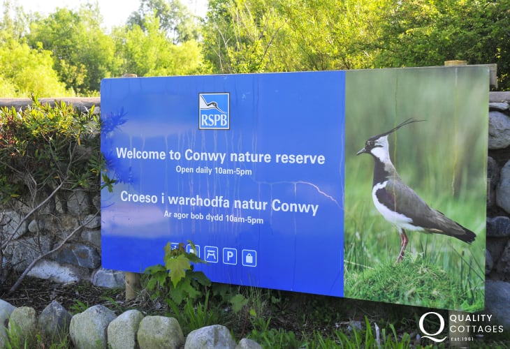 R. S. P. B Conwy Nature Reserve and Conwy Estuary, a short walk from the town centre