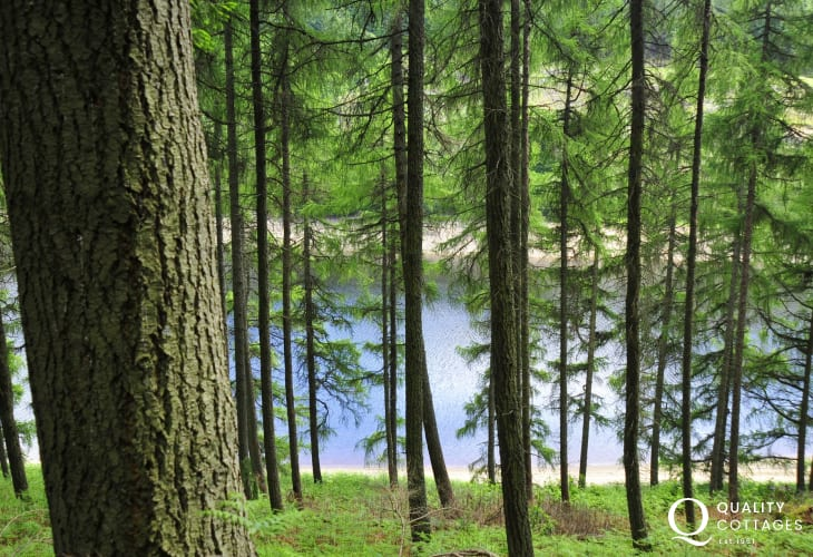 Hiking and cycling in the in the Irfon Forest