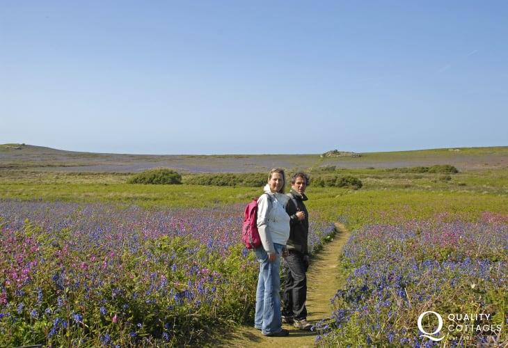 Skomer Island in spring and walk amongst the stunning display of bluebells