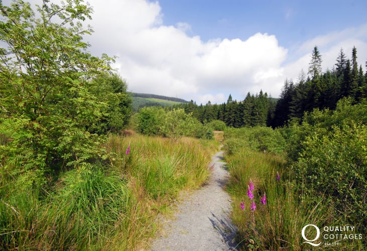 Hafren Forest with beautiful walks through lush green valleys to the source of the River Severn & the River Wye