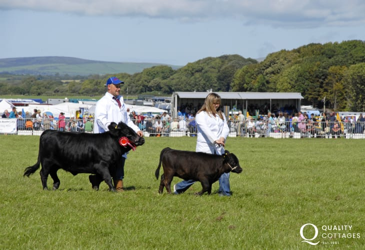 Do go along and enjoy the wonderful atmosphere of a summer agricultural show