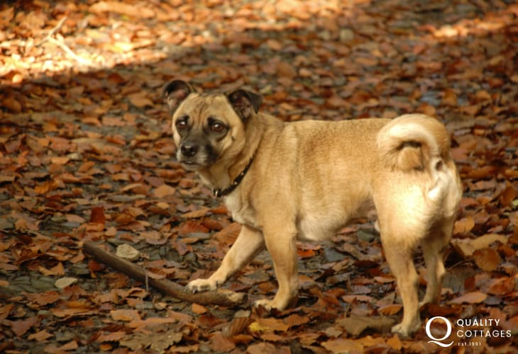 Most Quality Cottages welcomes pets. Enjoying an autumn walk