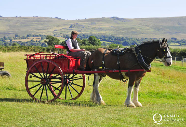Dyfed Shire Horse Farm, Castle Henllys, Scolton Manor Museum and Folly Farm are all within an easy drive for fun family days out