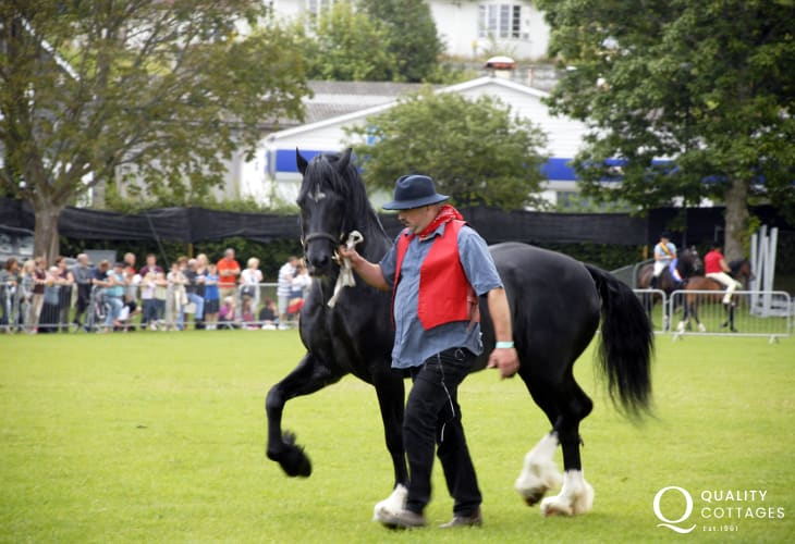 The 'Festival of Welsh Ponies & Cobs' takes place in Aberaeron's Square Field during the month of August - a lovely day out for all the family